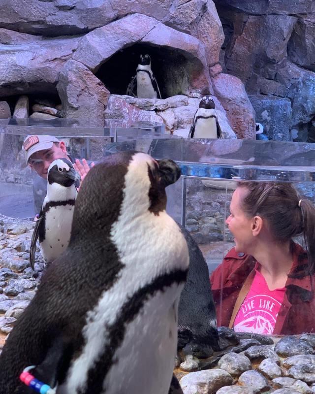 Penguin exhibit Georgia Aquarium