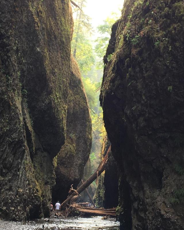 This beautiful hike in the Oneonta Gorge