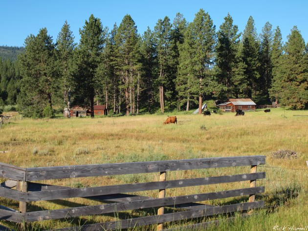 Unknown homestead near Whitney Oregon