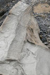 Fossil tree trunk