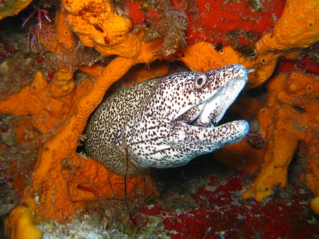 Contoh Simbiosis Pada Ikan dan Gambarnya  Mutualisme