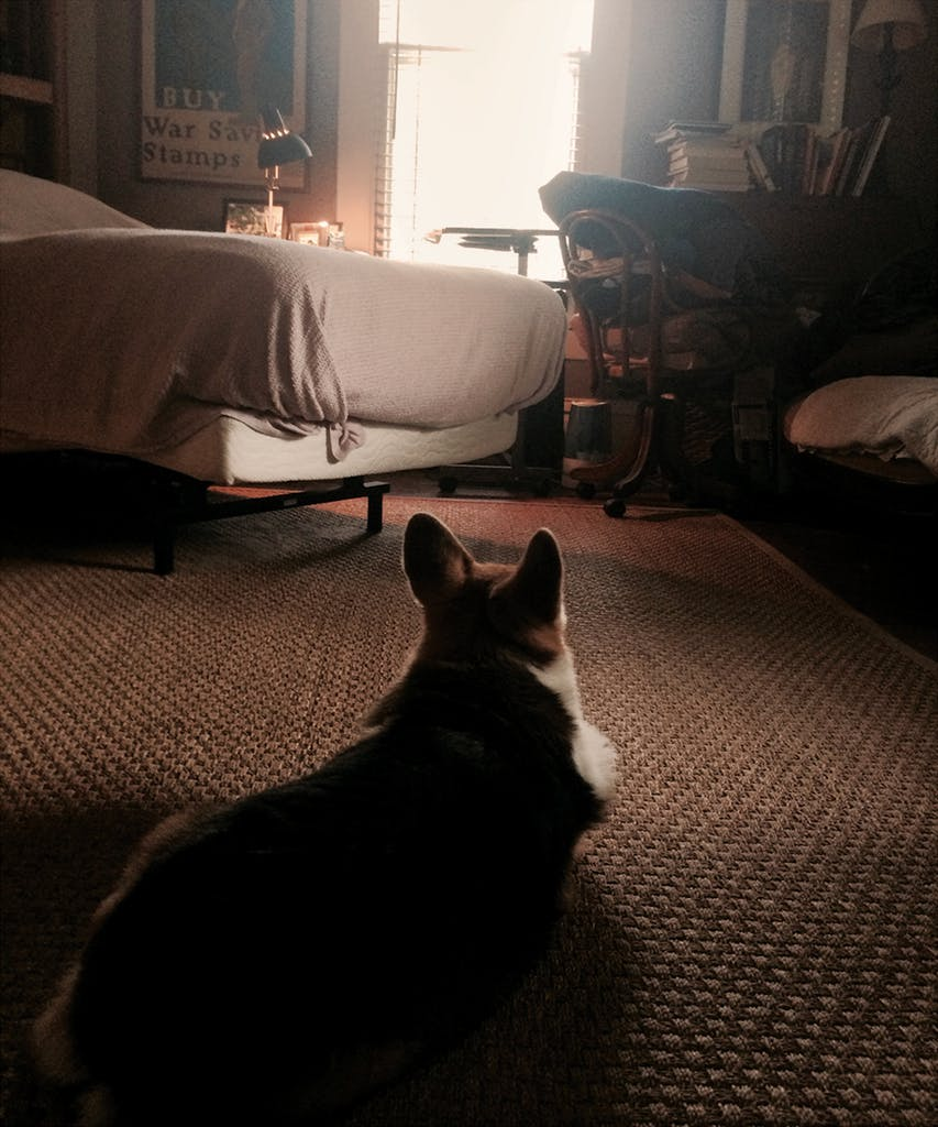 mimi-dog-essay-5.jpg