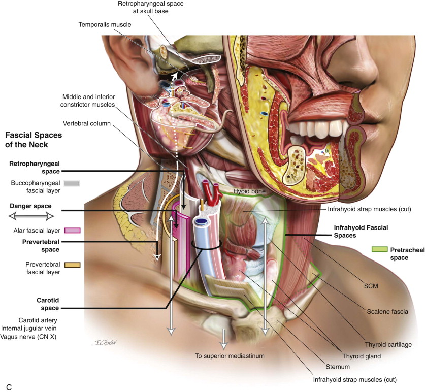 Fascial Spaces of the Head and Neck | Pocket Dentistry