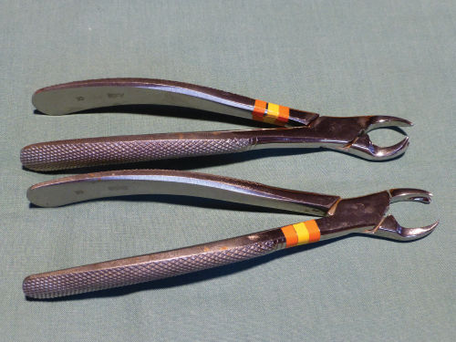 Photo of Upper permanent cowhorn extraction forceps.