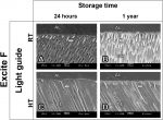 Influence of beam homogenization on bond strength of adhesives to dentin
