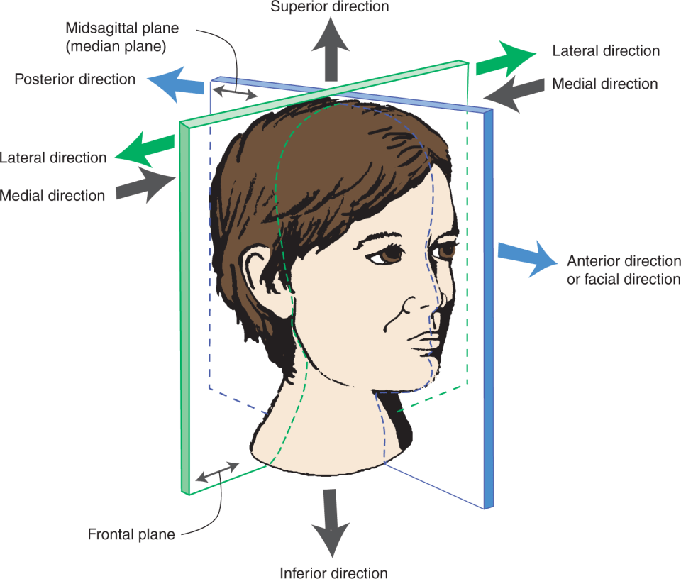 An image shows the structure of the face where the planes of the head and directions used to identify relative location of structures or surfaces of the head are labeled.