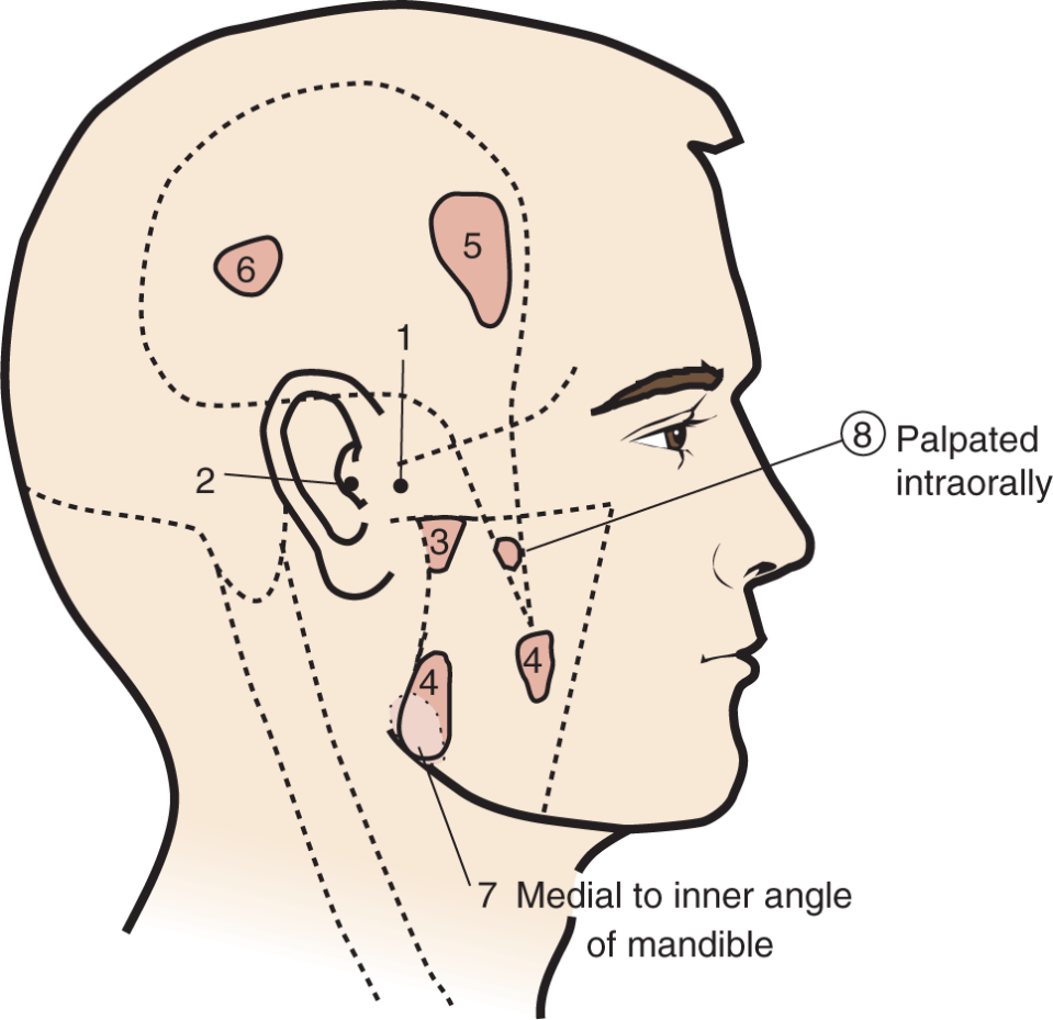 An illustration shows the human face and sites for palpation.