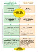 Periodontitis and neurodegenerative diseases