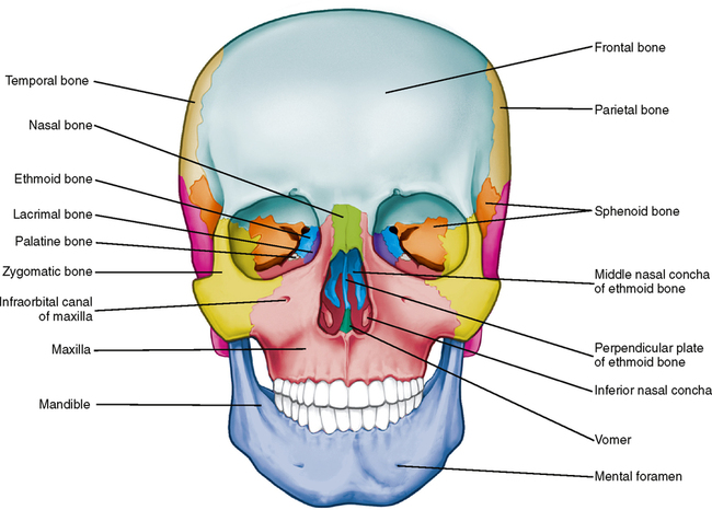 lateral view skull sutures diagram vw golf 1 wiring 26: osteology of the | pocket dentistry