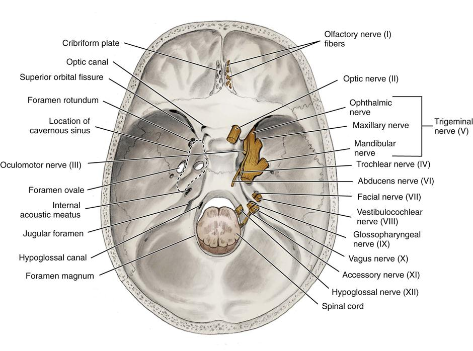 interior skull unlabeled » 4K Pictures | 4K Pictures [Full HQ Wallpaper]