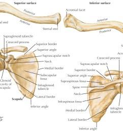 images bones of the upper limb [ 1465 x 1227 Pixel ]