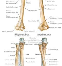 images carpal bones [ 1264 x 2225 Pixel ]