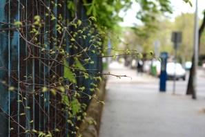 Spring in Terézváros
