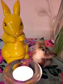 Bunny & fox by candlelight!