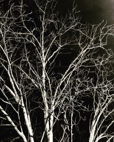 starting-here-tree-tops
