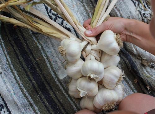 Learn how to make beautiful garlic braids