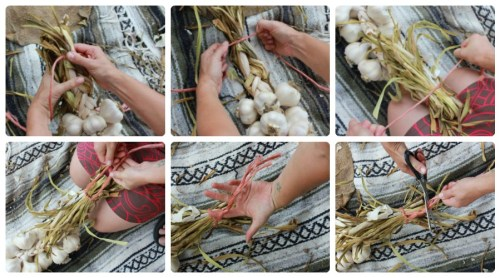 HOW TO BRAID GARLIC