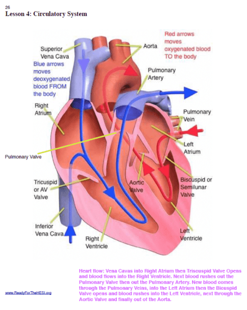 small resolution of this diagram will be very useful as it provides a visual guide on how the blood flows via the heart and its major structures