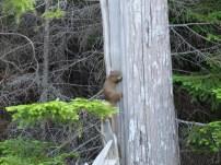 Wild Acadia