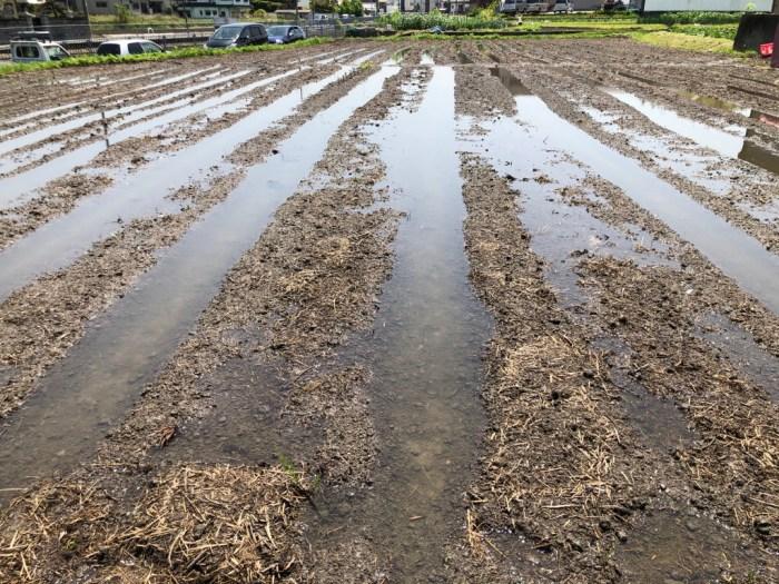水浸しの畑