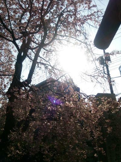 20150406 田無神社3