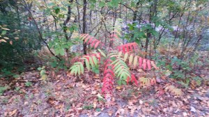 Tie Dye Fall Foliage