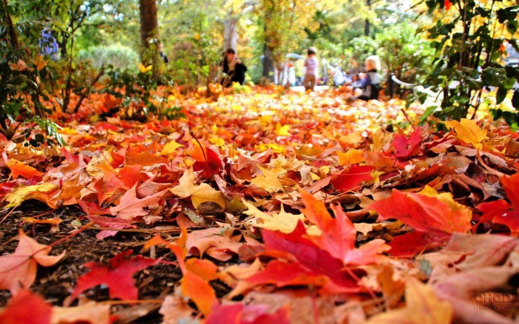 Fall Foliage Free Bike Tours