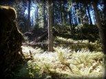 Leśny krajobraz w Dolinie Zadnich Koperszadów - sierpień 2012