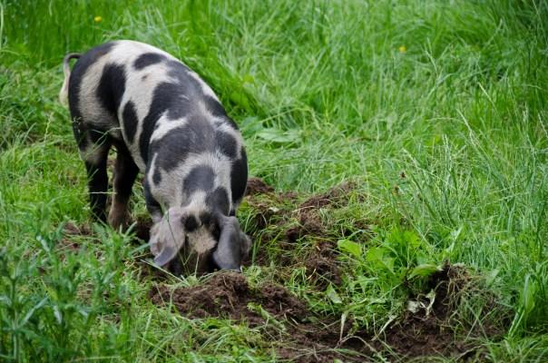 SEGES PODCAST#6 - Bæredygtigt landbrug