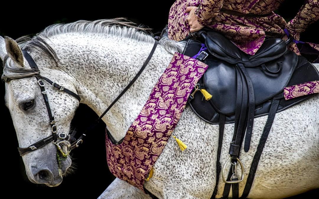 Le cheval, cœur de cirque