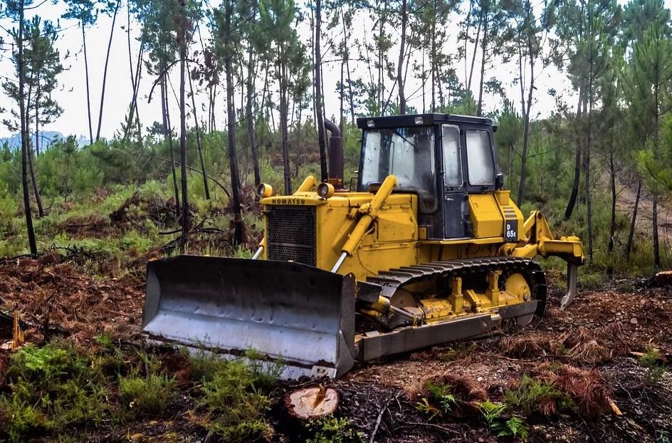 Horizeo : l'énergie verte au prix de la déforestation ?