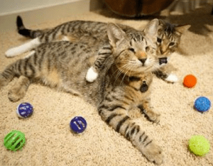Blind Cat Helps Blind Children Pet Show Radio Podcasts About Pets