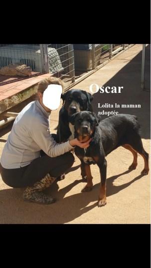 OSCAR (6)