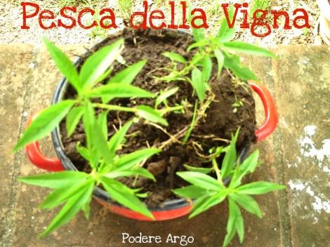 Pescadellavigna2013