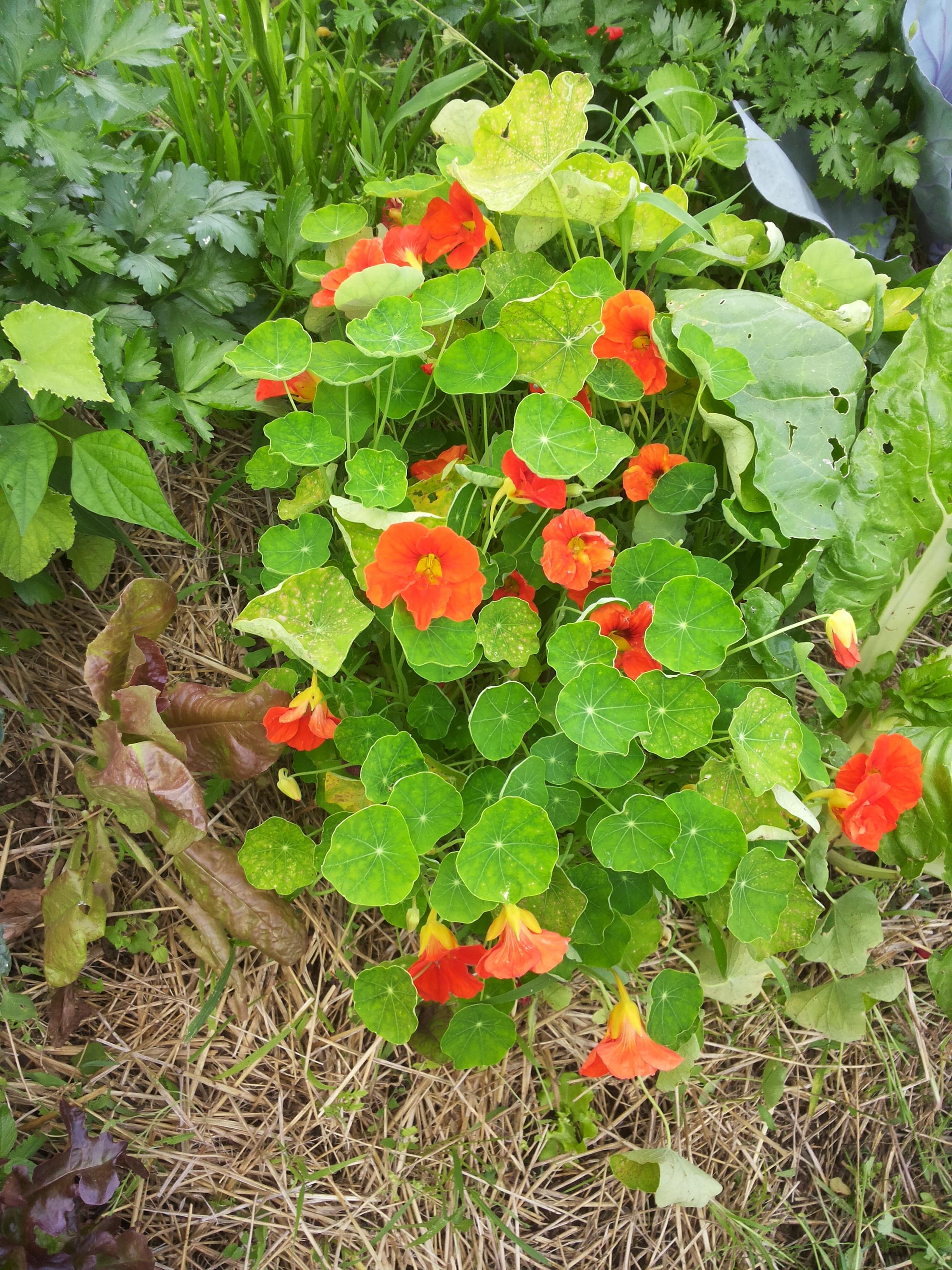 Fiori Da Piantare Nell Orto i fiori amici dell'orto - podere argo