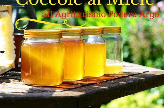 Soggiorno Coccole al miele