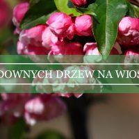 Pięć godnych polecenia gatunków drzew kwitnących wczesną wiosną