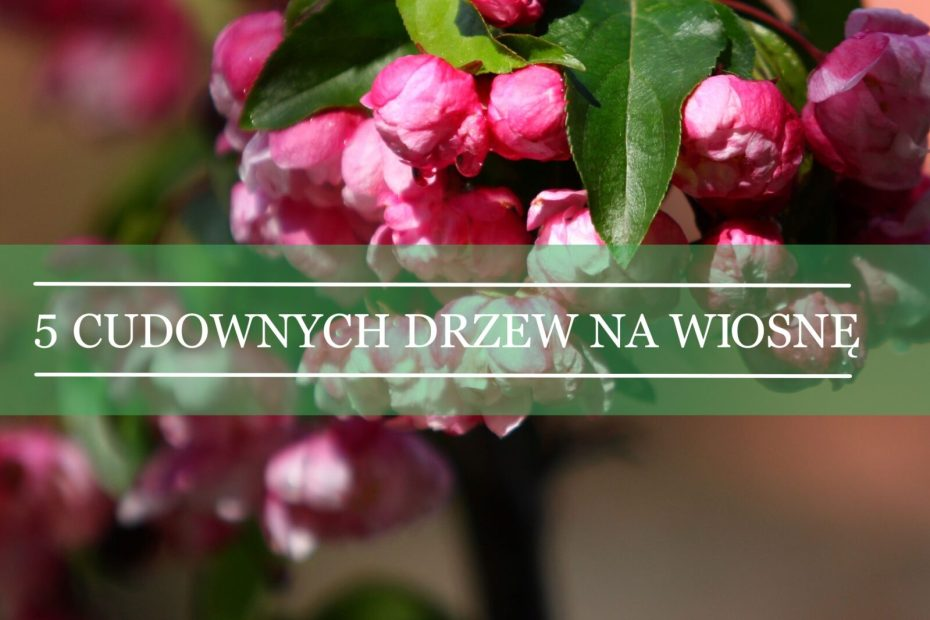 pięć gatunków drzew kwitnących na wiosnę