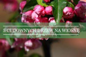 pięć gatunków drzew kwitnących wiosną