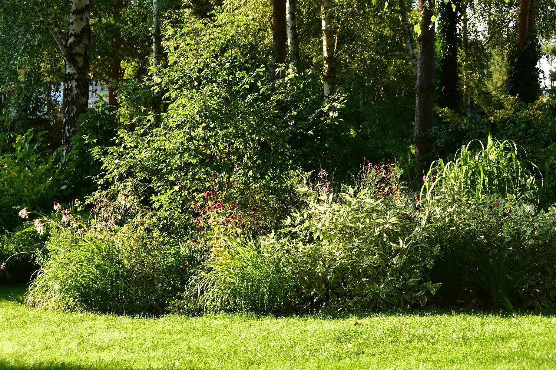 ogród cienisty Izy - lipiec; ogród w cieniu;
