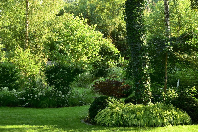 ogród cienisty Izy - lipiec; ogród w cieniu; kule cisowe; hakonechloa;