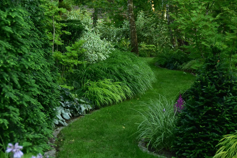 ogród cienisty Izy - lipiec; ogród w cieniu; hakonechloa i dereń biały