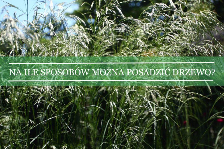 błędy przy sadzeniu roślin