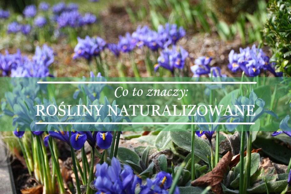 rośliny naturalizowane