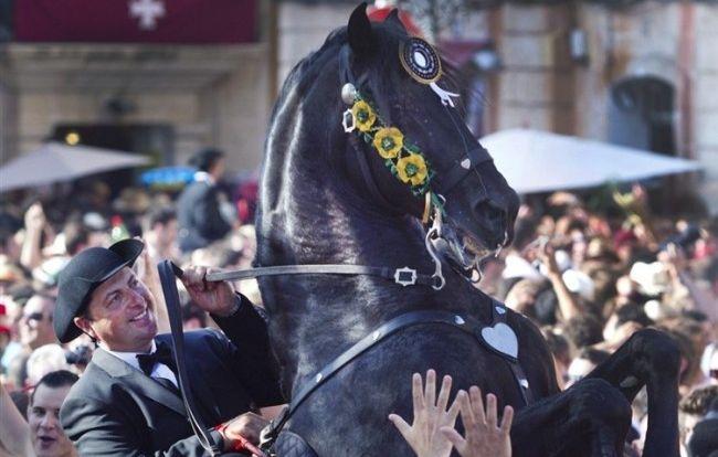 rearing-horse-parade-e1310406565912-650x414