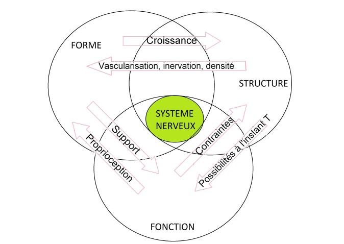 shéma forme structure fonction