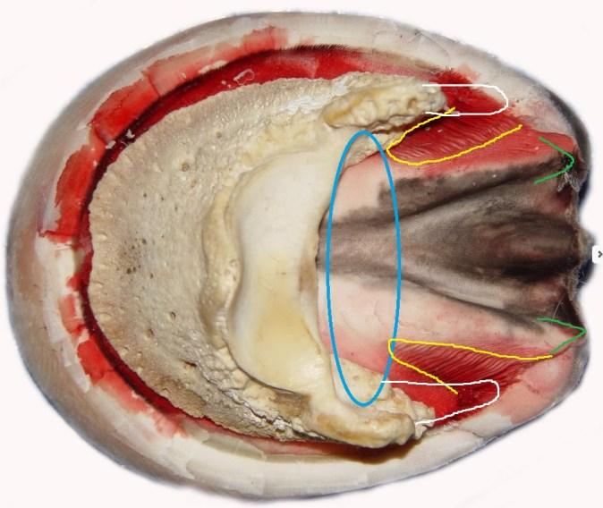 sidebones-1
