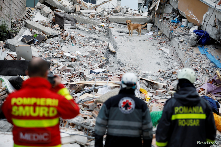A rescue dog searches for survivors in a collapsed building in Durres, after an earthquake shook Albania, November 28, 2019…