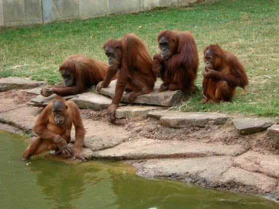 zoo-1076592_640