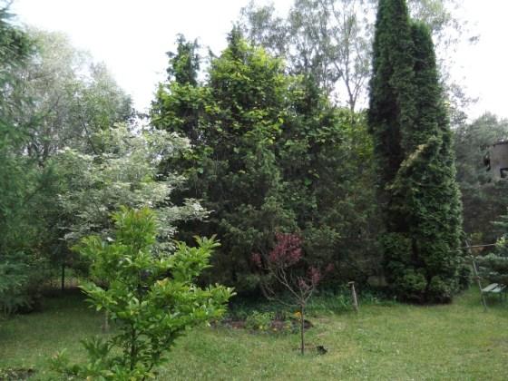Drzewa na mojej działce3
